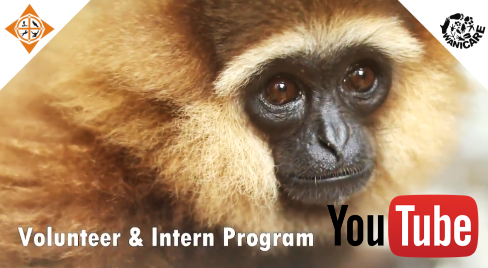 Video volunteer wildlife intern vet wanicare cikananga
