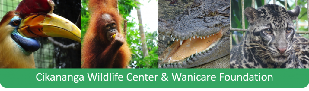 Cikananga wildlife rescue center wanicare animals ngo