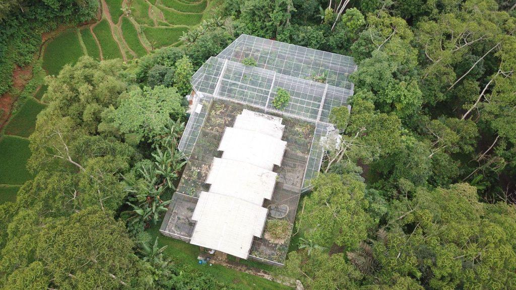 Javan Leopard Cikananga Wanicare Rehabilation Enclosure Four Paws