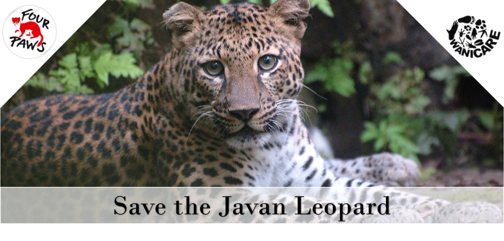 Save the javan Leopard bg FB