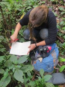 habitat assessment by Inge Tielen