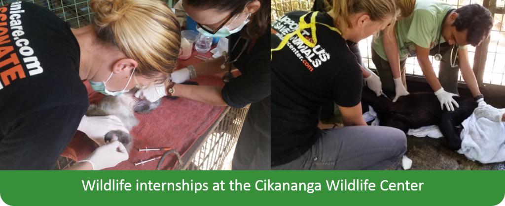 Internships wildlife Java stages indonesie wanicare Cikananga Animal Rescue Center