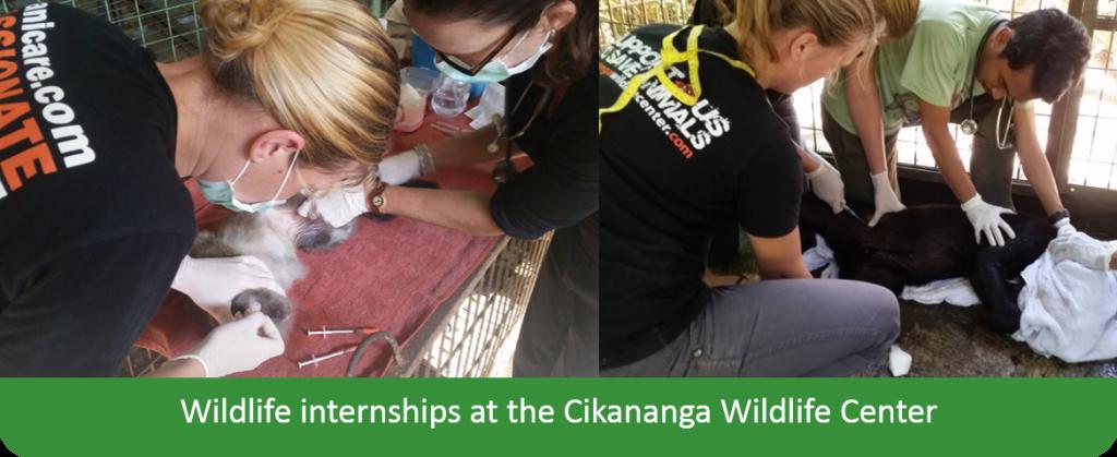 Internships wildlife Java stages indonesie wanicare Cikananga Animal Rescue Center