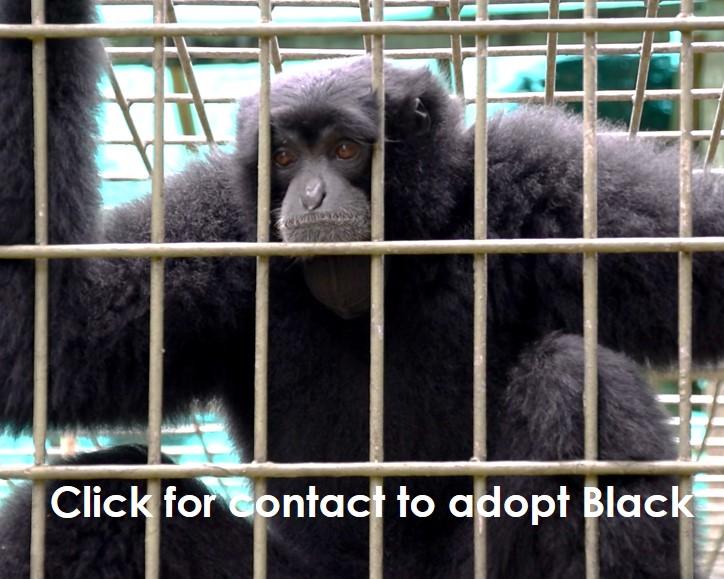 Adoption wildlife Wanicare Black