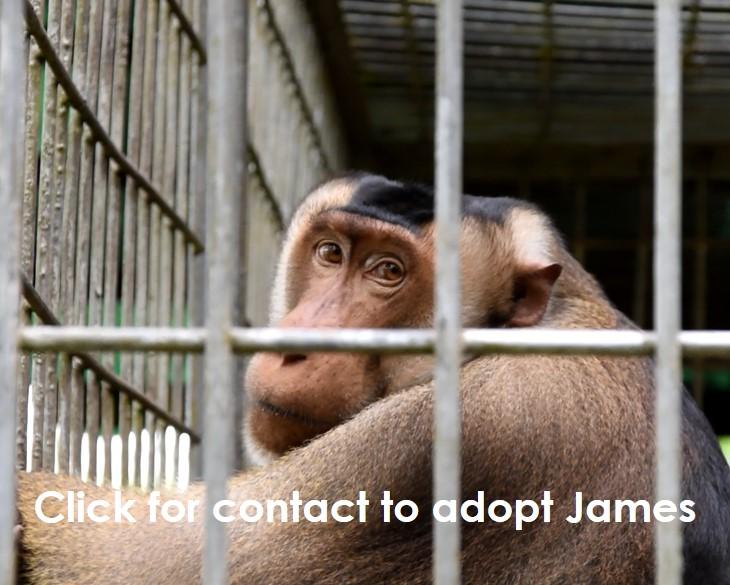 Adoption wildlife Wanicare James