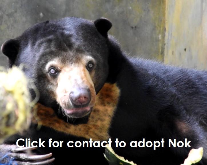 Adoption wildlife Wanicare Nok