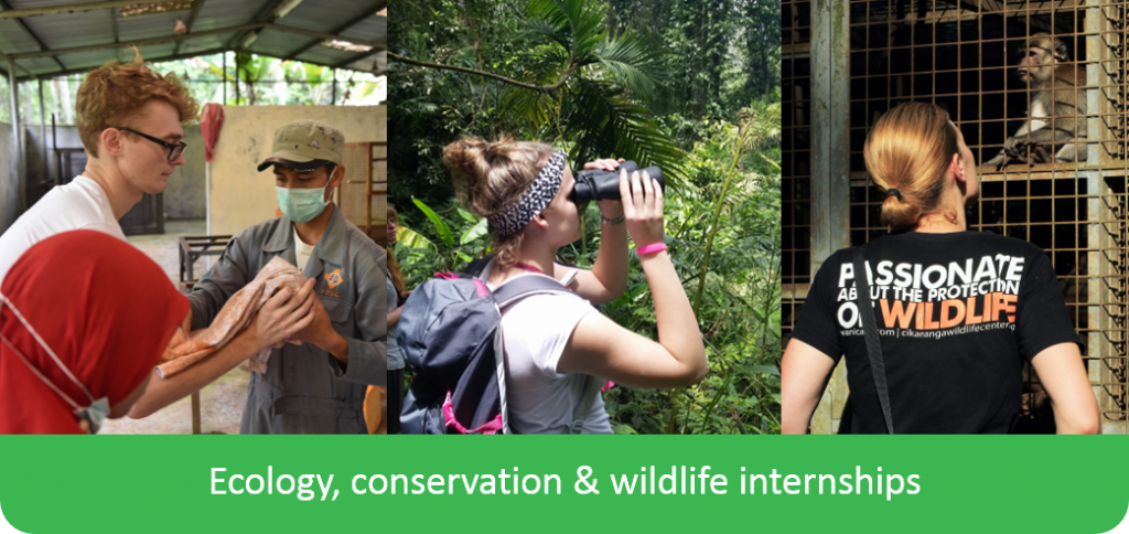 Ecology conservation wildlife internship