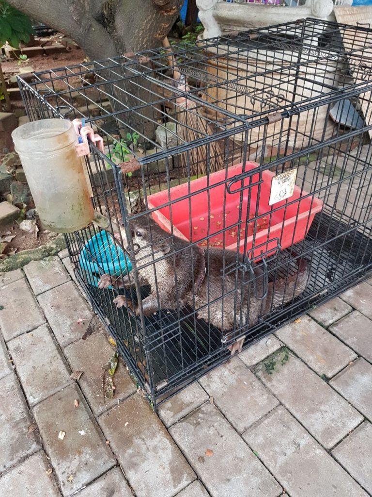 Otter Cikananga Wanicare 2
