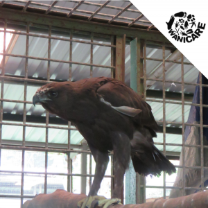 Wanicare birds Cikananga rescue