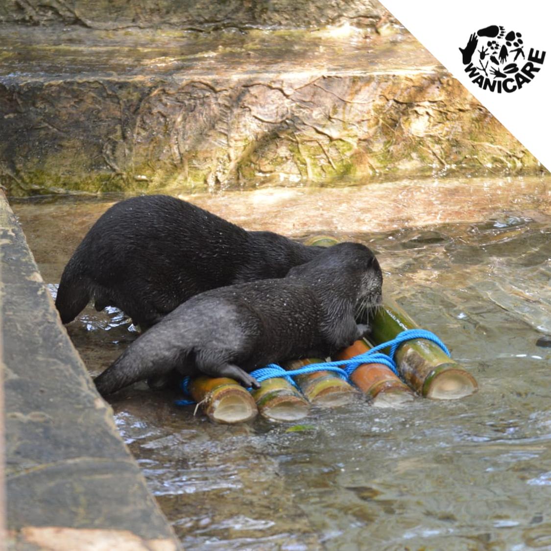 Otter-Cikananga-Wanicare-enrichment