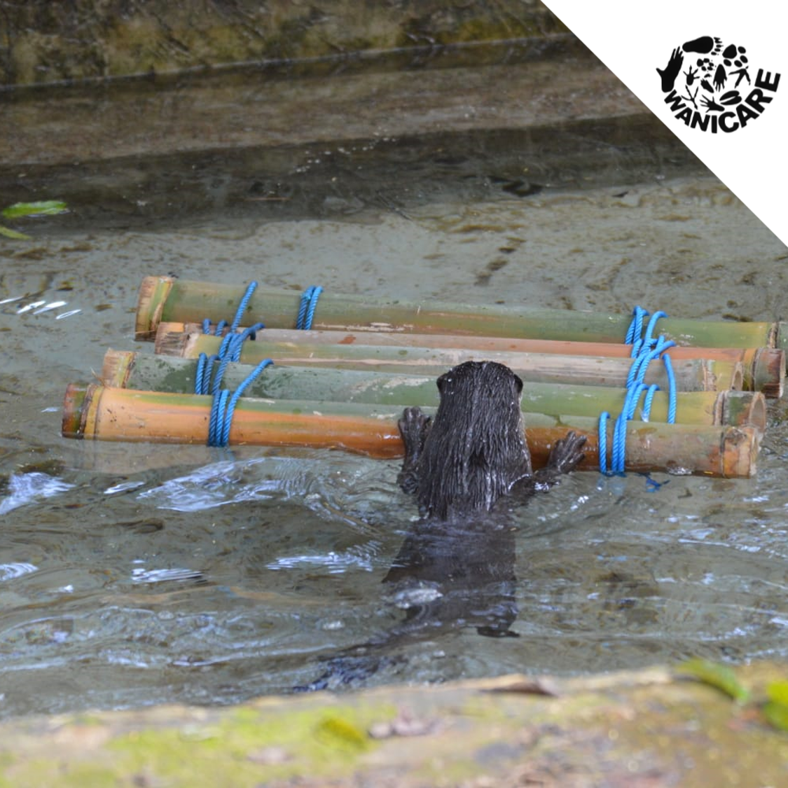 Otter-Cikananga-enrichment-wanicare