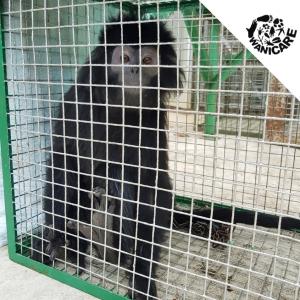 wanicare-cikananga-leaf-monkey-rescue-center