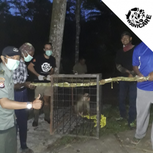 Animals rescue Indonesia Wanicare Cikananga