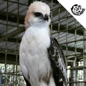 Cikananga wildlife center Wanicare V