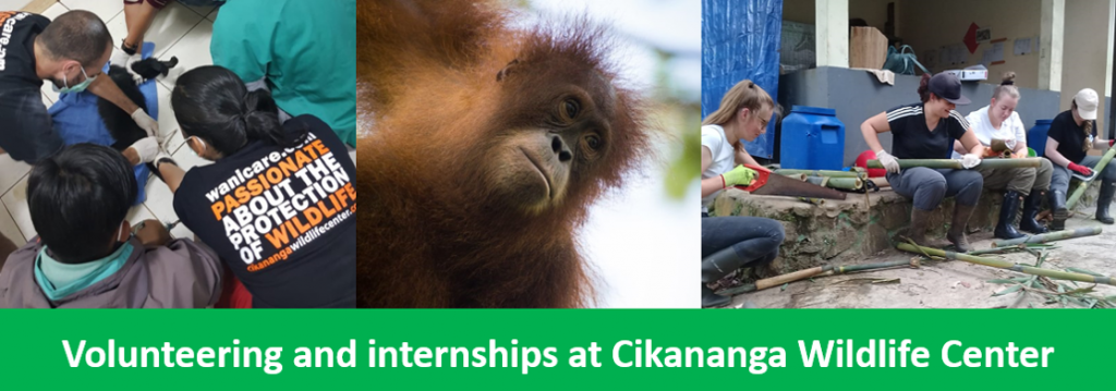 Cikananga_volunteering_Wanicare_Wildlife_internship